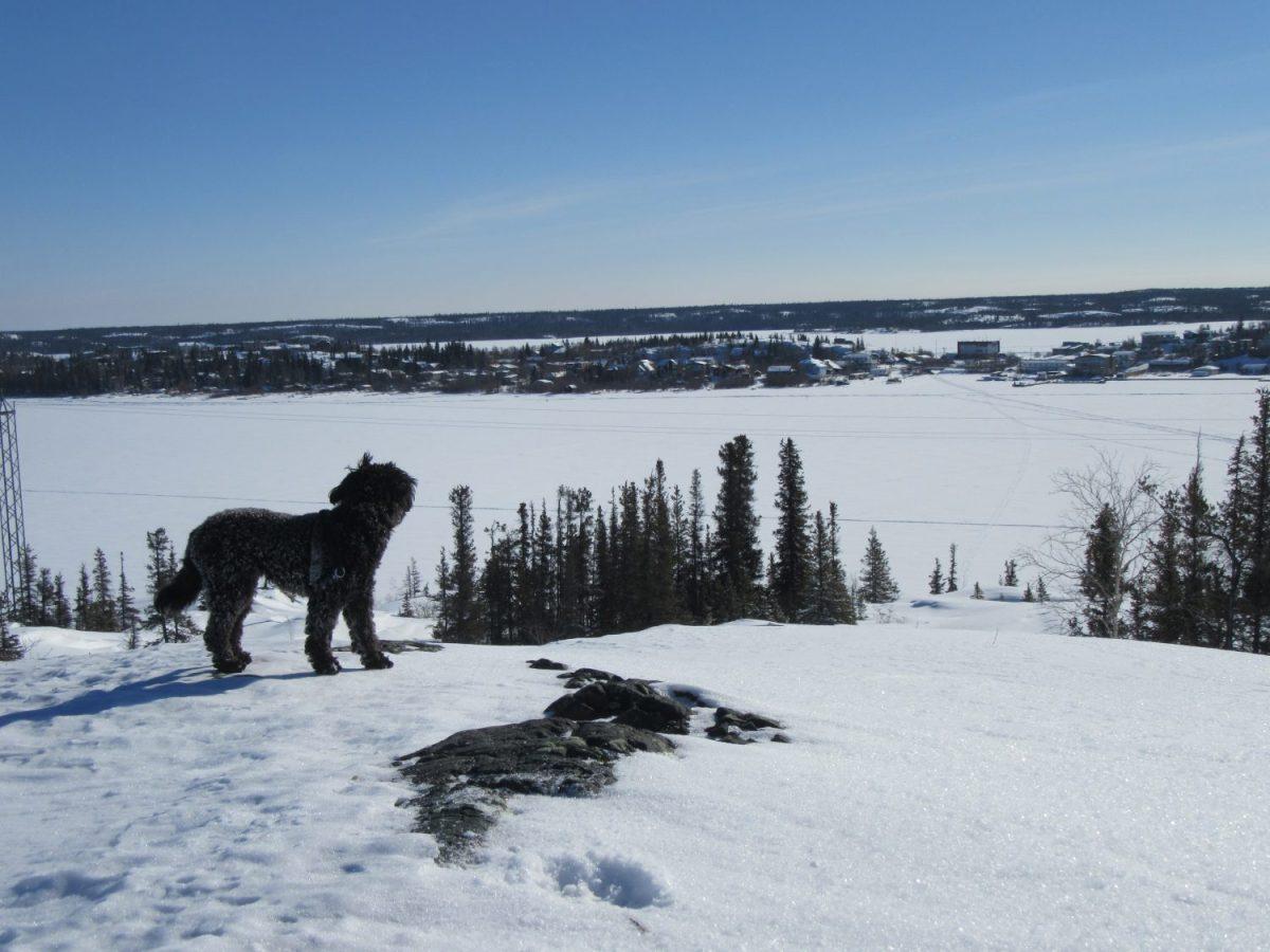 Yellowknife Ski Trails Land and Heart Yoga Teacher Training