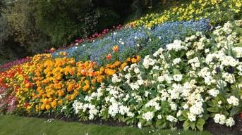 flowers james