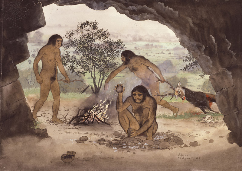 early humans While the exact number of early human species is debated, on this page are links  to summaries of the early human species accepted by most scientists click on.