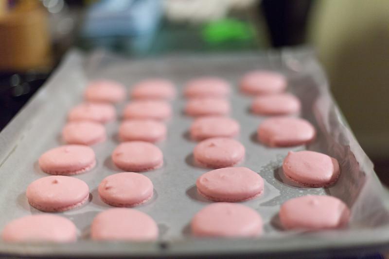 Kate Style Petite, Macaron shells