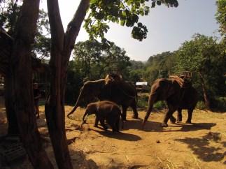 Three of the elephants...