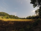 View of the rice fields on the trek