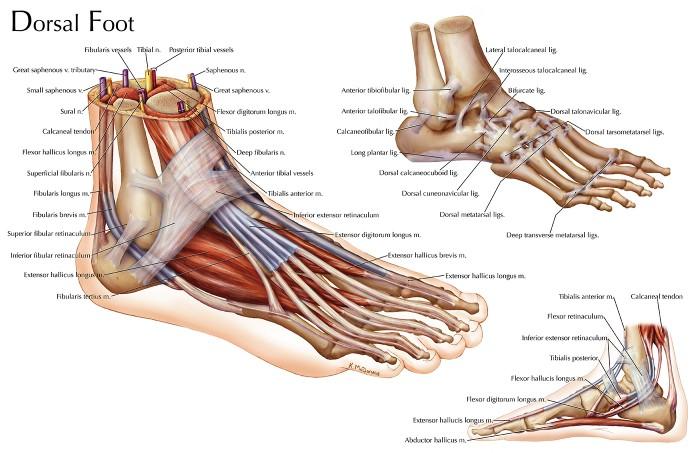 Katelyn Mcdonald Dorsal Foot