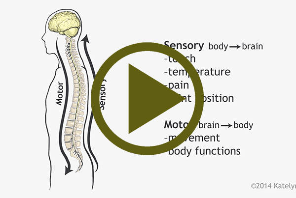 Spinal Cord Function