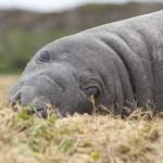 kate mccombie, photographer, melbourne, sub-antarctic