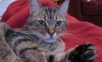 Kitty Photo Shoot