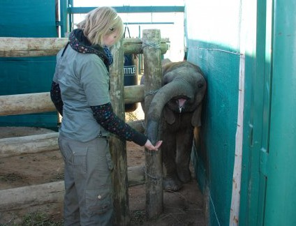 Themba the orphaned elephant