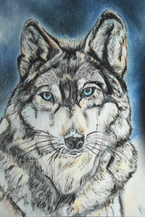 Wolf art by Kate on Conservation
