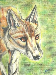 Fox art by Kate on Conservation