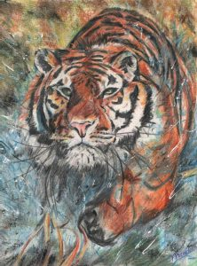 Tiger-art-by-Kate-on-Conservation-pencil