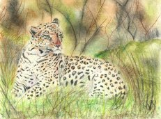 Leopard art by Kate on Conservation