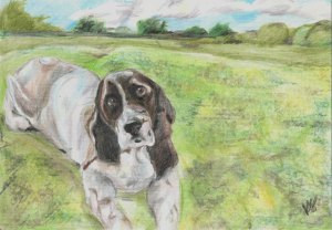 Dog art by Kate on Conservation