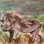 Warthog by Kate on Conservation
