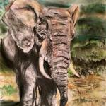Elephant Art by Kate Snowdon