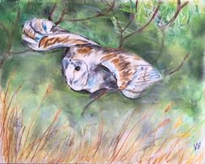 kate on conservation owl art