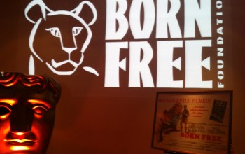 A Wild Night at the Movies with Born Free