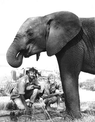 Pole Pole the elephant
