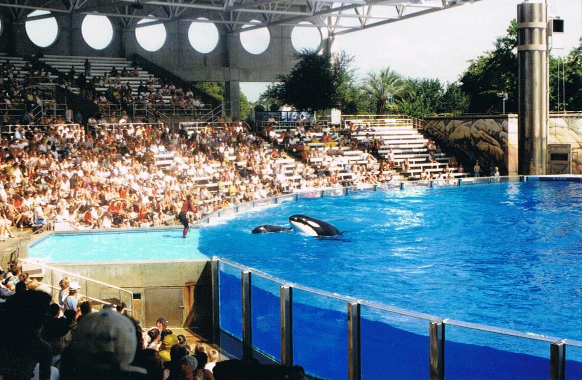 SeaWorld: Behold, the great water circus!