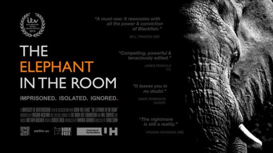 The elephant in the room poster