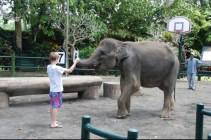 Captive Indian elephant with child