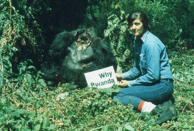 Dian Fossey and a decapitated gorilla