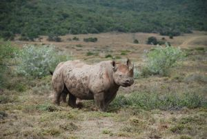Rhino photography by Kate on Conservation