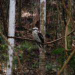 Bird photography by Kate on Conservation