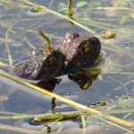 Frog Photo by Kate on Conservation