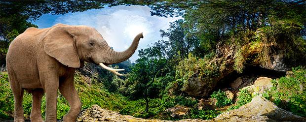 vEcotourism elephants