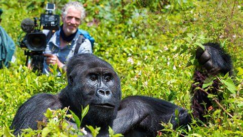 gorilla family and me Gordon Buchanan