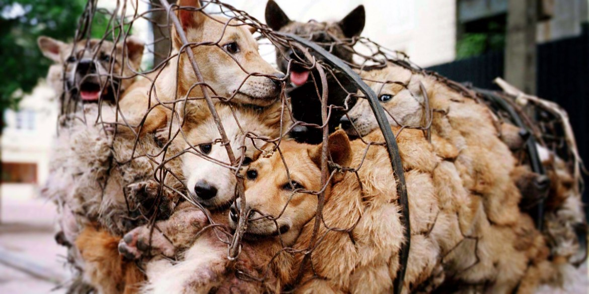 Ugly Truth Behind the Dog Meat Trade: Guest Post by Olivia Williams