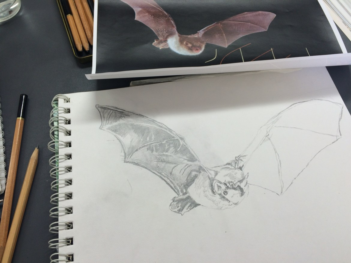 Drawing class at Woodberry Wetlands' BatFest