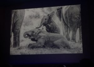 Remembering elephants, Royal Geographical Society