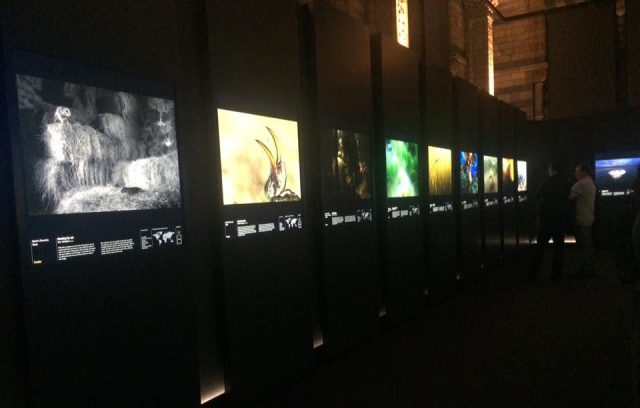 nhm-wildlife-photographer-exhibition
