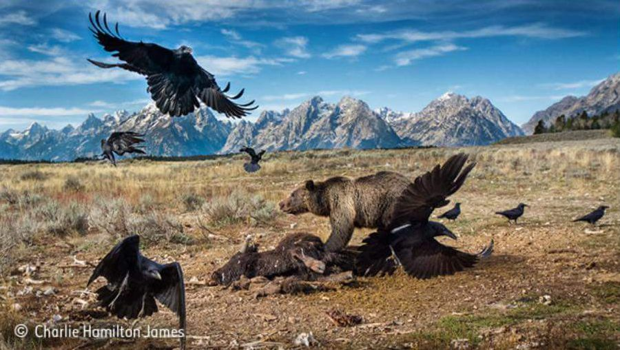 Wildlife Photographer of the Year 2016 — My top 10 picks