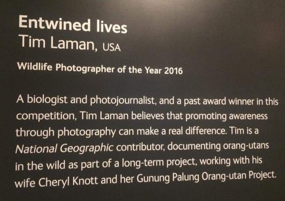 winning-entry-nhm-wildlife-photographer-of-the-year