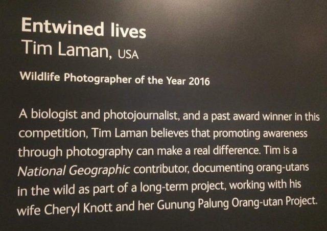 winning-entry-nhm-wildlife-photographer-of-the-year