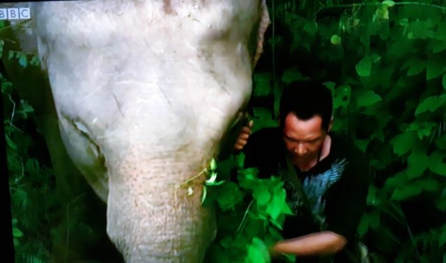Elephant sanctuary BBC series Thailand: Earth's Tropical Paradise