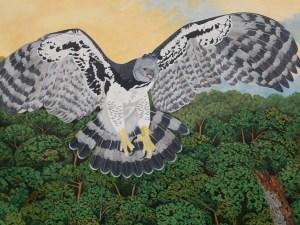 harpy eagle by Omra Sian