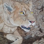 lioness close up by Omra Sian