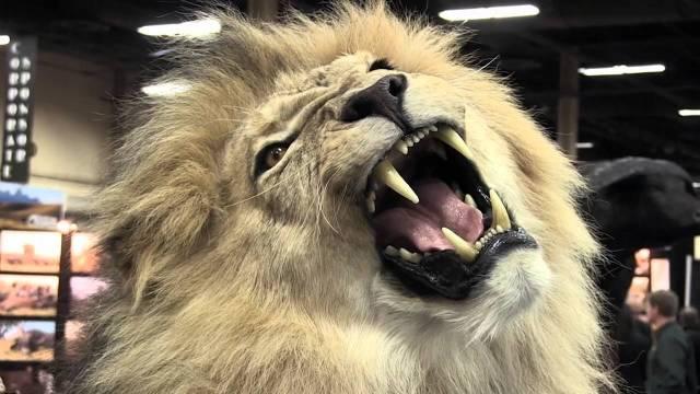 lion trophy born free foundations