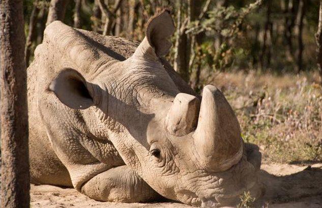 Sudan tribute from Helping Rhinos