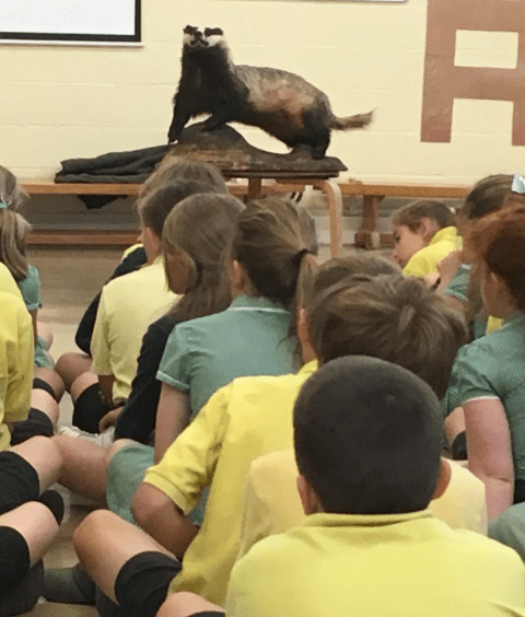 Boris-the-badger-East-Harling-Primary-School-assembly