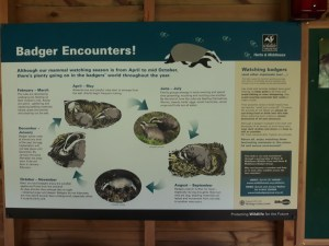 Badger-Encounters-information-board-at-Tewin-Orchard