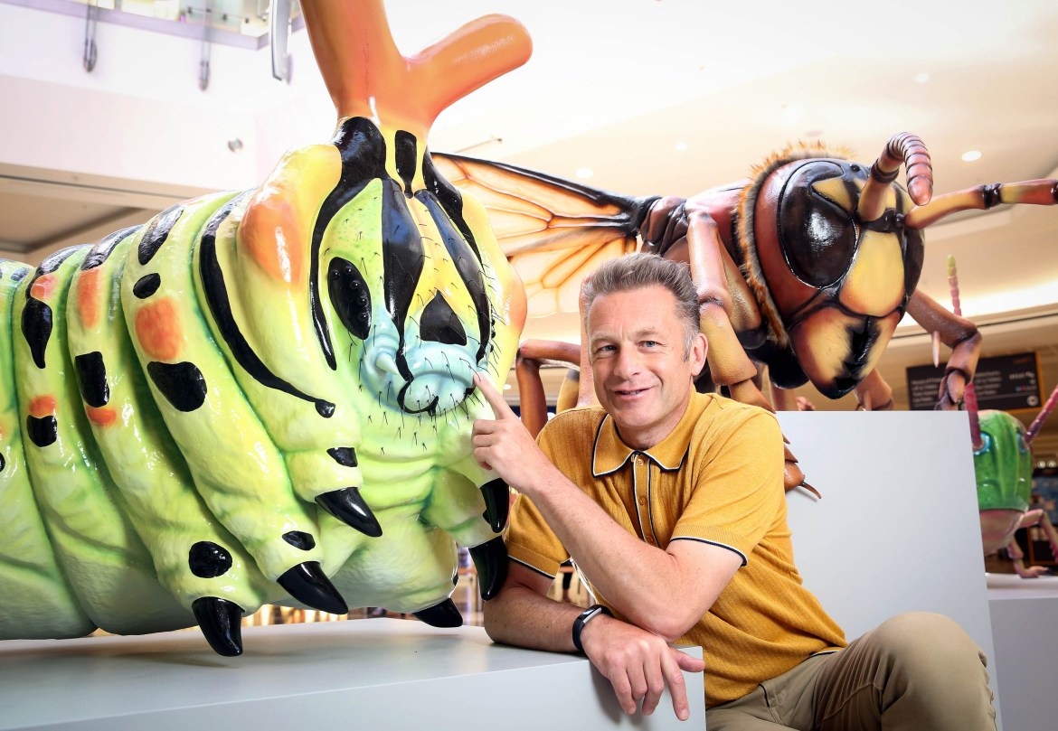 Chris Packham Interview: Are we losing our connection with creepy crawlies?