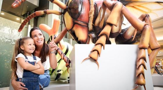 big bugs on tour intu shopping centres