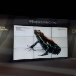 Nat-Geo-screens-showing-photo-ark-frog-image-at-iIllegal-Wildlife-Trade-conference-2018