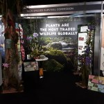 plants-are-the-most-traded-wildlife-globally Illegal Wildlife Trade conference 2018