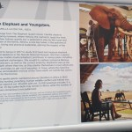information on matriarch elephant and youngsters sculpture by Camilla Le May