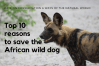 Top 10 reasons to save the africa wild dog title card